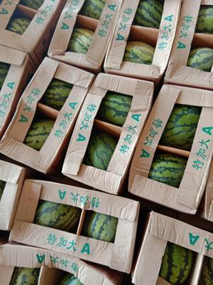 云南省德宏傣族景颇族自治州瑞丽市甜王西瓜 8斤打底 8成熟 1茬 有籽