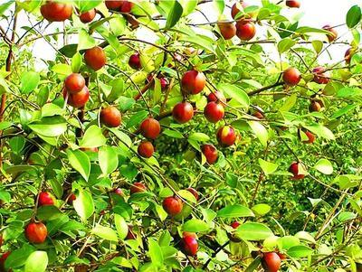 贵州省六盘水市钟山区野山茶籽