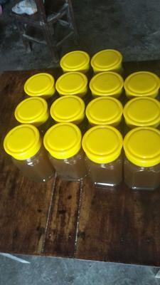 贵州省黔南布依族苗族自治州长顺县土蜂蜜 玻璃瓶装 2年 100%