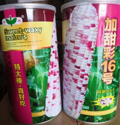 河南省南阳市卧龙区玉米种子  双交种 ≥96% ≥99% ≥85% ≤13% 加甜彩16号