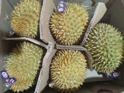广西壮族自治区崇左市凭祥市巴掌榴莲 80 - 90%以上 2 - 3公斤