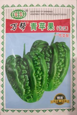 河南省南阳市卧龙区苹果苦瓜种子 袋装 苦瓜种子 袋装
