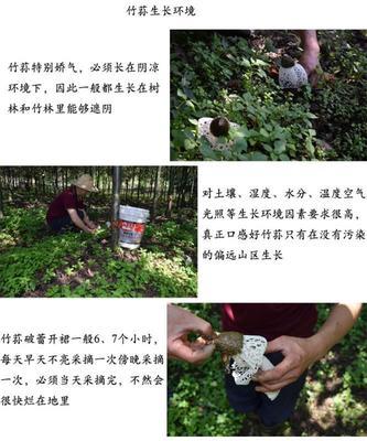 四川省广元市青川县红托竹荪 特级 干竹荪 1.5~2cm 10cm以下