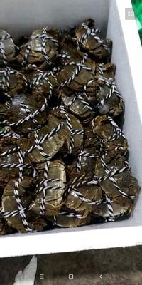 广东省广州市海珠区洪湖大闸蟹 2.0-2.5两 公蟹