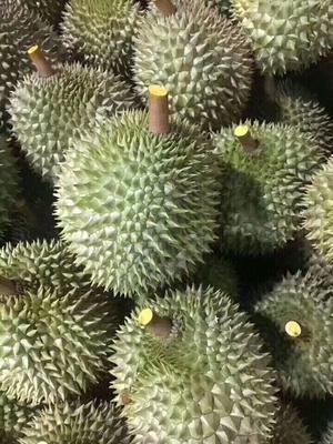 广西壮族自治区防城港市东兴市猫山王榴莲 2公斤以下 60 - 70%以上