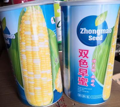 河南省南阳市卧龙区玉米种子  三交种 ≥95% ≥99% ≥85% ≤13% 双色早蜜水果玉米