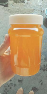 云南省大理白族自治州弥渡县土蜂蜜 塑料瓶装 100% 2年以上