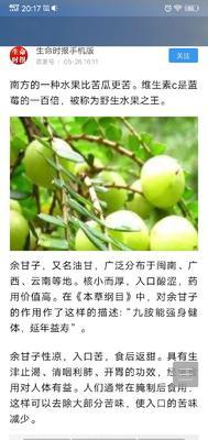 云南省昆明市五华区滇橄榄 14g以上