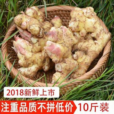 湖南省郴州市汝城县小黄姜 6两以上 带土