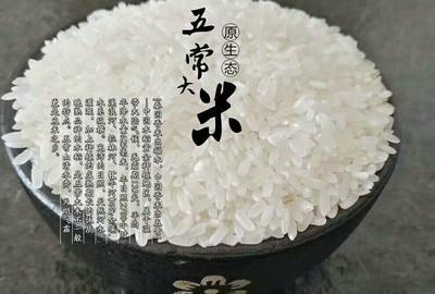 黑龙江省哈尔滨市五常市五常大米  一等品 晚稻 粳米 五常核心产区直发保真