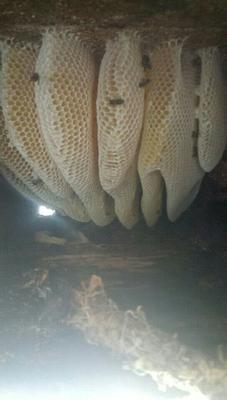 云南省昭通市巧家县土蜂蜜 散装 2年以上 80%以上