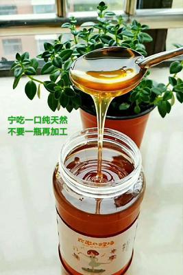 山东省临沂市兰山区土蜂蜜 塑料瓶装 2年以上 98%