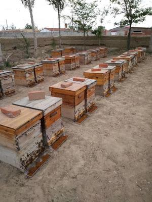 新疆维吾尔自治区阿勒泰地区阿勒泰市杂花粉 18-24个月