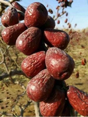 这是一张关于和田大枣 统货的产品图片