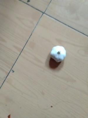 这是一张关于金乡大蒜 4.5cm以下 多瓣蒜的产品图片