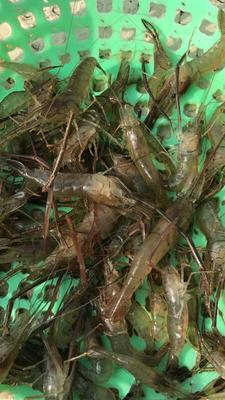 这是一张关于河虾的产品图片