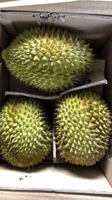 广西壮族自治区崇左市凭祥市金枕头榴莲 80 - 90%以上 2 - 3公斤
