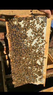 云南省大理白族自治州宾川县野生蜂蜜 玻璃瓶装 2年以上 95%以上