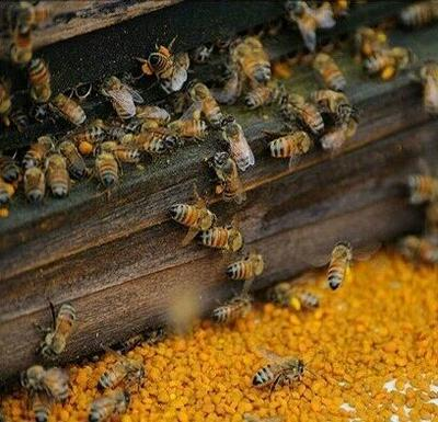 安徽省滁州市明光市土蜂蜜 塑料瓶装 2年以上 100%