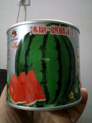 江苏省宿迁市沭阳县花皮西瓜种子 ≥85% 亲本(大田用种)