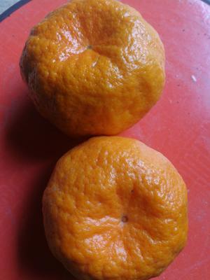 这是一张关于芦柑 统货 2 - 3两的产品图片