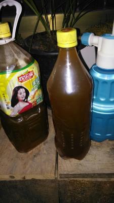 云南省文山壮族苗族自治州富宁县土蜂蜜 塑料瓶装 95%以上 2年以上