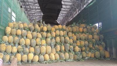 广西壮族自治区南宁市青秀区海南菠萝 2 - 2.5斤