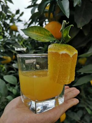 这是一张关于甜橙 55 - 60mm 4-8两的产品图片