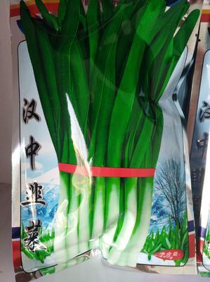 山东省潍坊市寿光市韭菜种子  袋装 汉中雪韭苔韭铁杆青