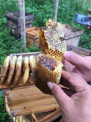 广西壮族自治区崇左市龙州县意蜂蜂蜜 塑料瓶装 2年以上 90%以上