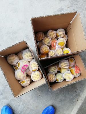 广西壮族自治区玉林市容县广西红光橙 80-85mm 4-8两
