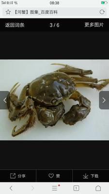 这是一张关于安徽螃蟹 2.5-3.0两 统货的产品图片