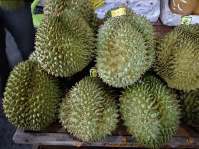 广西壮族自治区崇左市宁明县泰国金枕榴莲 80 - 90%以上 2 - 3公斤