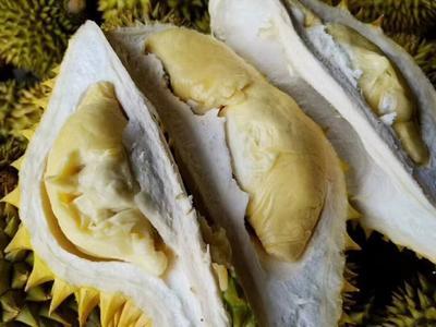 广西壮族自治区崇左市凭祥市金枕头榴莲 80 - 90%以上 2公斤以下