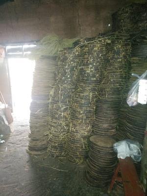 福建省福州市永泰县现榨山茶油