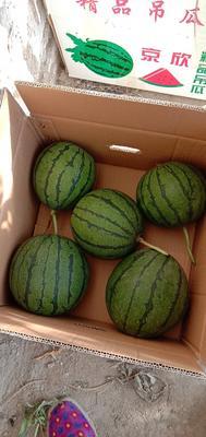这是一张关于京欣西瓜 3斤打底 9成熟 1茬 有籽的产品图片