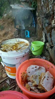 云南省临沧市镇康县土蜂蜜 桶装 2年以上 100%