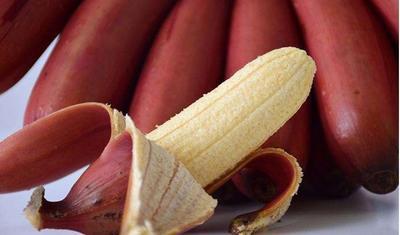 广西壮族自治区钦州市灵山县红蕉苗 抗寒性强 含糖量高