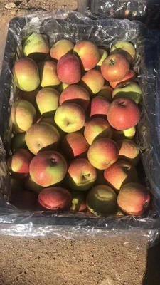 这是一张关于小国光苹果 60mm以上 日晒面 光果的产品图片