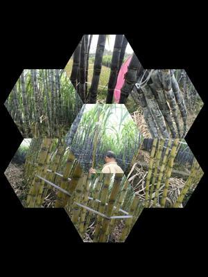 这是一张关于黑皮甘蔗 2 - 2.5m 5 - 6cm的产品图片