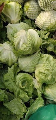 这是一张关于球生菜 1斤以上的产品图片