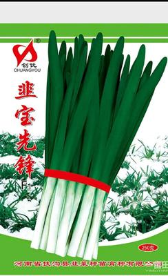 河南省开封市通许县韭菜种子 袋装