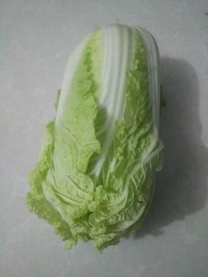 陕西省西安市长安区小娃娃菜  3~4两以上