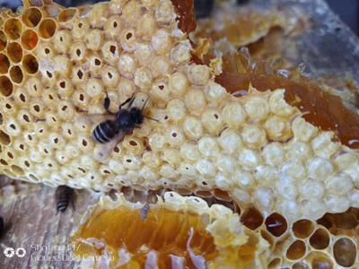 云南省德宏傣族景颇族自治州芒市野生蜂蜜 塑料瓶装 2年以上 100%