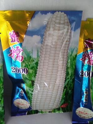 山东省潍坊市寿光市玉米种子 常规种 ≥99% ≥99.9% ≥97% ≤5%