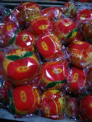 这是一张关于顺昌芦柑 7 - 7.5cm 3两以上的产品图片