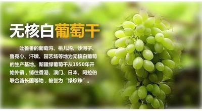河南省郑州市中牟县无核白葡萄干 优等