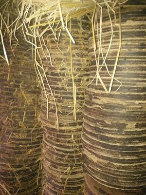 这是一张关于茶枯的产品图片