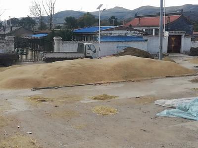 这是一张关于莜麦的产品图片
