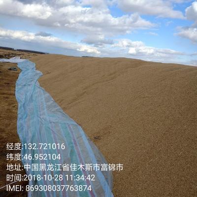 黑龙江省佳木斯市富锦市黑水稻  中稻/一季稻 粮食是非常好